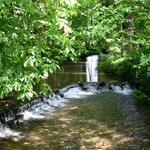 Woodland stream