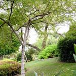 Wrigley Mansion Foliage