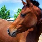 Young Arabian