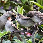 You're Next - Feeding baby sparrows