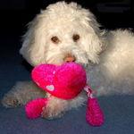 Zoe with her Valentine